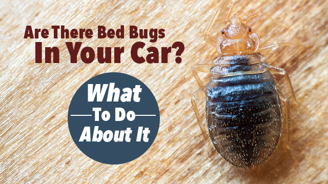Bed Bug Control 249 Affordable Heat Treatments Local Expert
